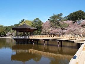 ゆっくり休みながら桜を楽しめる【浮見堂】