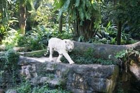 檻がない!自然の姿の動物たち『シンガポール動物園』