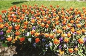 オランダの観光名所 キューケンホフ公園