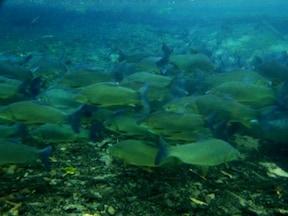 清流で魚と泳ぐ爽快感!『プラタ川ツアー』