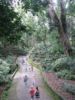 野生猿の自然保護区 『モンキーフォレスト』