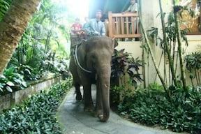 象がアテンドしてくれる エレファントパーク