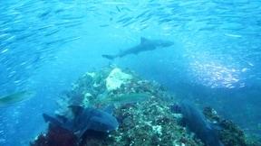 アカエイやドチザメに出会える『伊戸・沖前根』