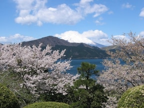 恩賜箱根公園/例年は4月中旬~5月上旬
