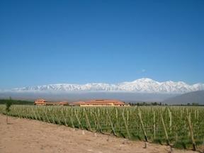 アルゼンチン最大のブドウ畑でワイナリーツアー!