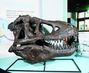 恐竜時代に思いを馳せて『恐竜化石発掘体験』