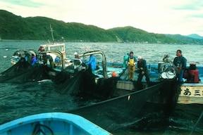 船上で網を引く『大敷網体験』は一生の思い出に!