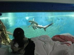 水槽の上で眠る!オールナイト水族館で良い夢を