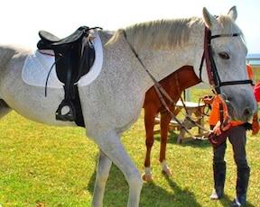 沖縄の絶景海岸線を、馬に乗って!乗馬体験