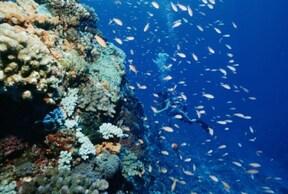 お魚いっぱいの真栄田岬で体験ダイビング