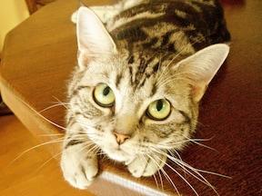 猫と暮らす家にするリフォームの鍵は、爪とぎ・臭い・運動