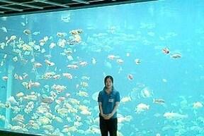 日本一標高が高い海水水族館『箱根園水族館』