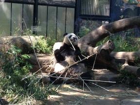 もちろんココも外せません、上野動物園