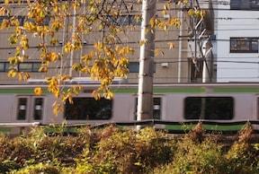 神宮通り公園