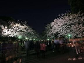 1位:上野恩賜公園