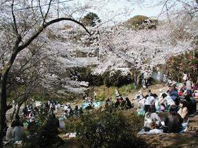 【源氏山公園】鎌倉のお花見スポット