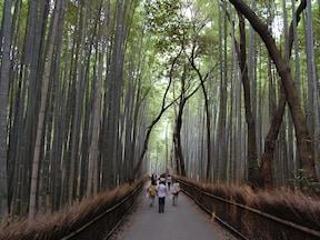 贅沢な京都日帰り、一人旅