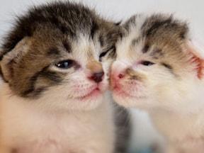 愛情表現だけじゃない「猫のスリスリ」