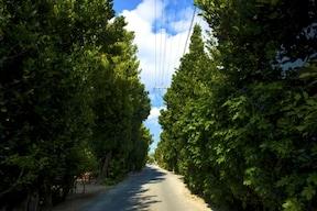 風と木漏れ日に心癒される並木道