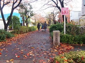 呑川緑道(全長約5km)