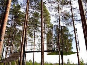 まるで大きな鳥の巣!?/スウェーデン