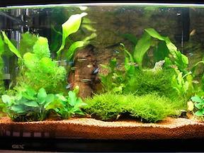 例1:多種多様な水草でコーディネート