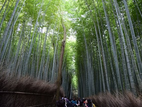 嵐山・嵯峨野の竹林の道