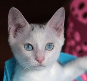 猫の目を見つめてはダメ?