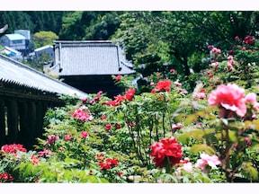 『わらしべ長者』の舞台、奈良の長谷寺の歩き方