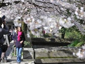 春旅におすすめしたい、京都・東山エリアの桜名所