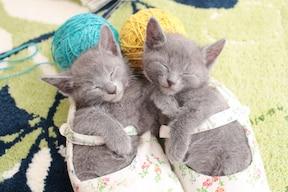 猫の幸せな瞬間集BEST5