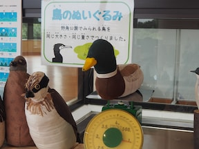 大田市場&野鳥公園