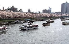 隅田川に並ぶ水辺の桜