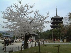 奈良に来たならここは外せない【古都奈良の文化財】