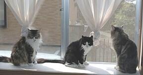 猫は室内飼いがいい?!