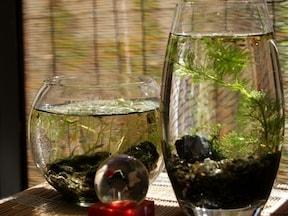 ボトルアクアリウムで飼育できる魚6種