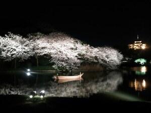 三溪園(さんけいえん):桜の季節は幻想的な雰囲気に