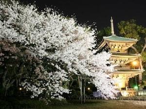 京都旅行気分が味わえる!? フォーシーズンズホテル椿山荘 東京