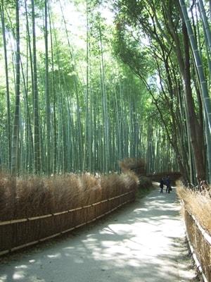 嵐山の竹林の散歩道