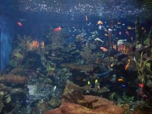 バンクーバー近海を再現したディスプレイが美しい水族館