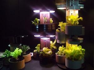 栽培期間35日、野菜が収穫できるLED照明