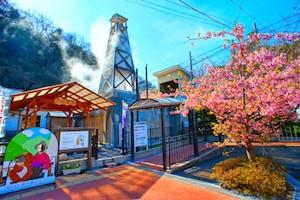 熱川温泉の熱川桜(例年の最盛期:3月下旬)