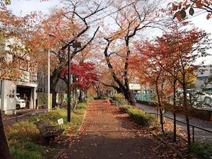 呑川緑道の新橋から見る紅葉