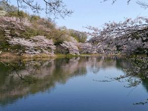 三ツ池公園:広大な敷地内をぐるぐると散策