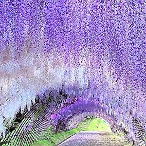 Gwに行きたい5月に見頃を迎える全国おすすめ花の名所15選all About