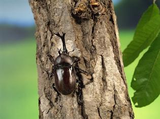 昆虫採集・標本の作り方を調べよう!