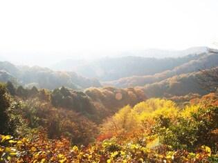 紅葉をたずねて鎌倉・獅子舞の谷ハイキング