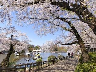 デートの定番!ボートからお花見「井の頭恩賜公園」(武蔵野市)