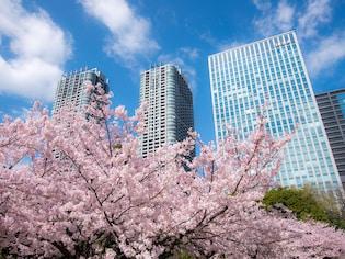 汐留の高層ビルをバックに花を咲かせる「浜離宮恩賜庭園」(中央区)