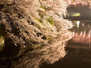 船・ボートから眺める!水辺の夜桜ライトアップ